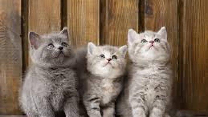 Konkurs marcowy Białych Smoków: Koty, kotki i koteczki ;-)